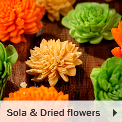 Sola and Dried fowers plants