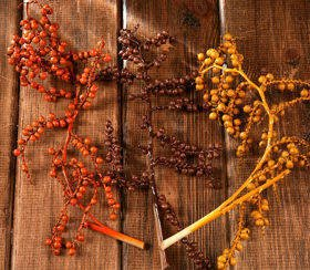 Canella twigs with fruits, 3 pcs/pkg, 20-30 cm, yellow-orange-brown