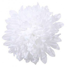 Chrysanthemum head, 16.5 cm - 12 pcs/pkg  - white