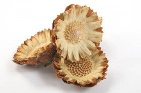Compacta rosette - flower head 6  pcs/pkg