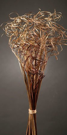 Curly grass, bunch, gold