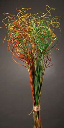Curly grass, bunch, orange-yellow-green