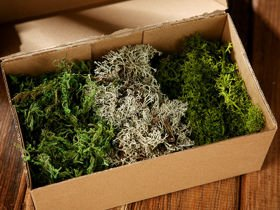 Decorative moss,  mix, 70g/pkg,