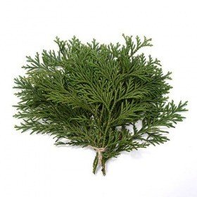 Decorative natural thuja, bunch od 3 twigs, ca. 30 cm