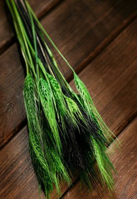 Duffed grain, 30-40 ears, ca. 40 cm, green-black