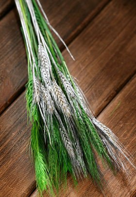 Duffed grain, 30-40 ears, ca. 40 cm, green-silver