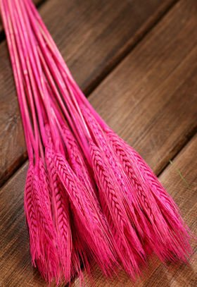 Duffed grain, 30-40 ears, ca. 40 cm, pink