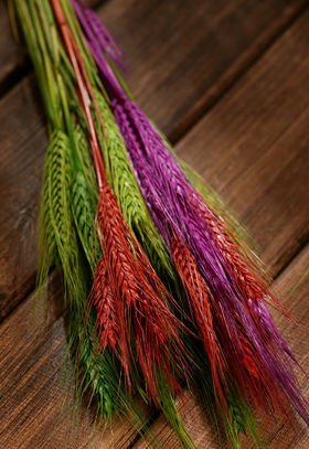 Duffed grain, 30-40 ears, ca. 40 cm, purple-brown-orange