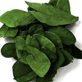 Dyed leaves, 30 g, ca 850 pcs - dark green 0,5 l