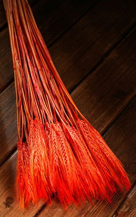 Ears of grain, orange, 60-70 cm, ca. 24 pcs.