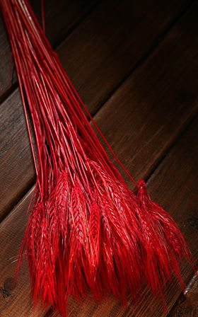 Ears of grain, red, 60-70 cm, ca. 24 pcs.