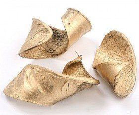 Elephant ear plant 10-12 cm 6 pcs.  gold