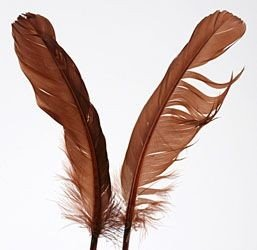 Feathers 19 cm 10 pcs/pkg - brown