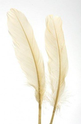 Feathers 19 cm 10 pcs/pkg - cream colour