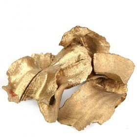Gold Lignified husks of fruits about 20pcs
