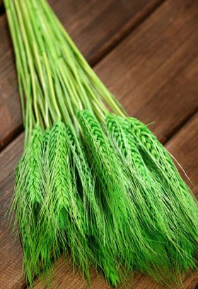 Green grain, 30-40 ears, ca. 40 cm
