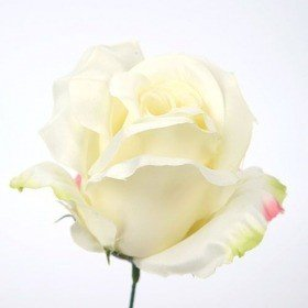 Head of rose,  14 cm, sateen - cream  3 szt/op