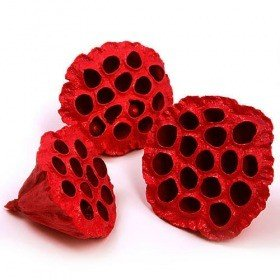 Lotus dyed diameter 6-8 cm 6 pcs/pkg red