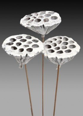 Lotus on stick dyed diameter 6-8 cm 6 pcs/pkg silver