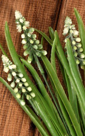 Muscari - bunch, white ca. 30 cm