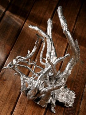 Natural silver root ca. 40 cm
