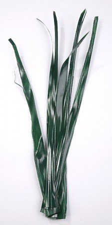 Palm leaf 30-40 cm 6 pcs/pkg green