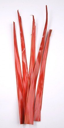 Palm leaf 30-40 cm 6 pcs/pkg red