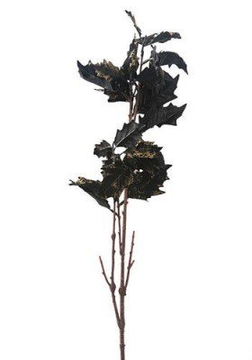 Poinsettia (Star of Bethlehem) black 35 cm