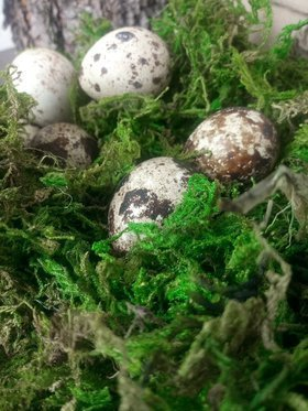 Quail eggs in moss. Deco box 10/10 cm