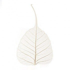 Skeleton leaves, 10 cm, cream, 50 pcs/pkg