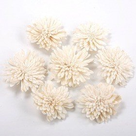 Zinia flowers, 2-3 cm, 24 pcs/pkg - white