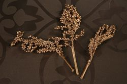 Golden Canella, lacquered, 3 twigs