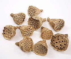 Lotus 2-3 cm 12 pcs gold