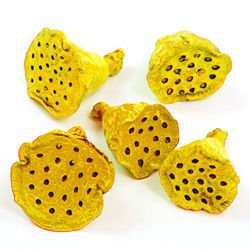 Lotus 2-3 cm 12 pcs yellow