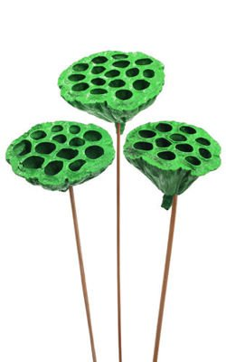 Lotus on stick dyed diameter 6-8 cm 6 pcs/pkg light green