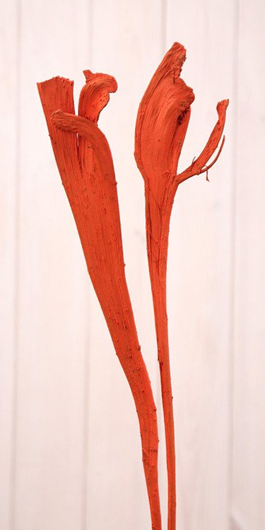 Orange Natraj, 40-50 cm, 1 pcs.