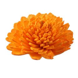 Zinia flowers, 5 cm, 10 pcs/pkg - bright orange PROMOTION