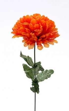 Chrysantheme 10/50 cm orange