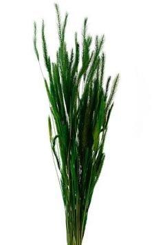 Suszone rośliny hurtownia