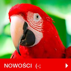 Nowości Hurtownia  GrandDeco.pl