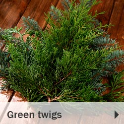 Green twigs