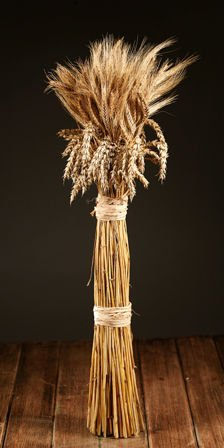 A bouquet of BIG sheaf of cereals -50-60 cm- about 100 ears of corn