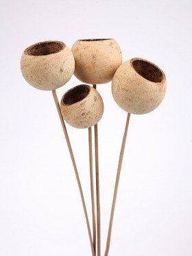 Bell cup on stick, 6 pcs/pkg, natural