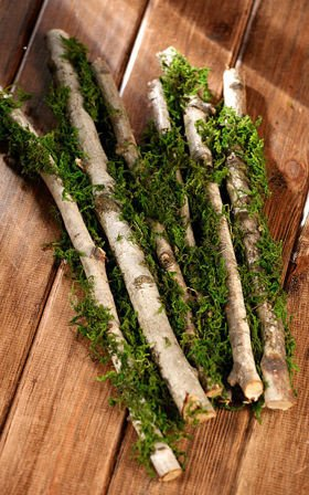 Birch with moss, 40 cm, 6 pcs/pkg, 1-3 cm