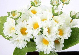 Bouquet of cream camomile - ca. 24 flowers 40 cm