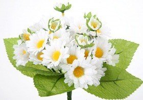 Bouquet of white oxeye daisies - ca. 24 flowers 40 cm