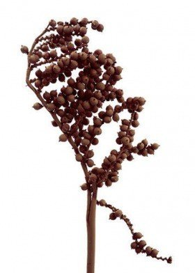 Brown Canella, lacquered, 3 twigs