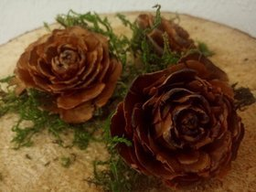 Cedar rose with moss 6 pcs / pack