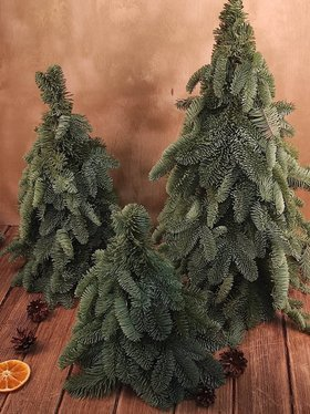 Christmas gift Norwegian Christmas tree 55 cm