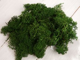 Chrobotek moss decorations 50g dark green